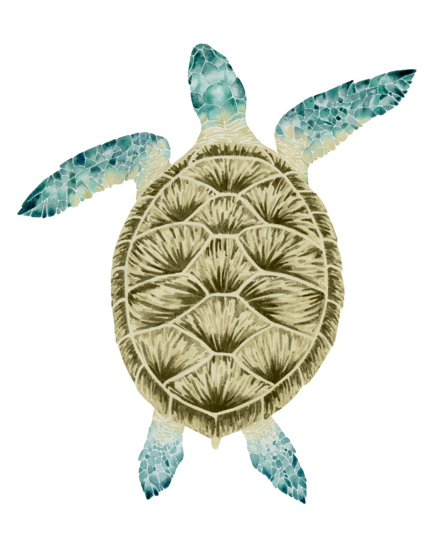 Baby Sea Turtle Ii High Quality Giclee Print Vintage Print Gallery